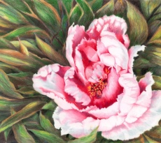 Pink Peony by Carol Miller