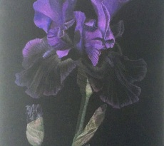 Purple Iris by Diane Masek-Blow