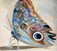 Butterfly by Donella Robbins