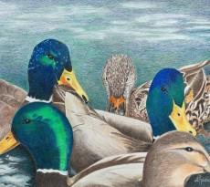 Quack by Jennie Rogers