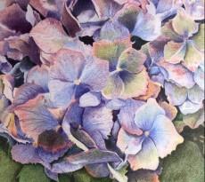 Hydrangea by Karen L. Smith