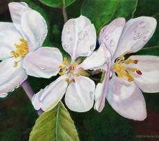 A Shower of Blossoms by Karen Saleen