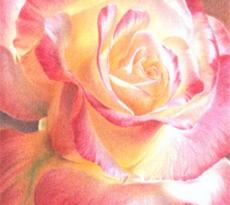 Fragrant by Kristen Doty
