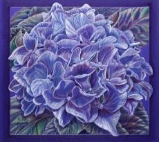 Oregon Hydrangea by Kristy Kutch
