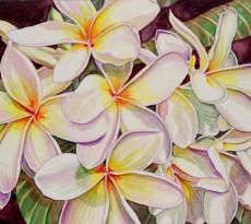 Plumeria by Kristy Kutch