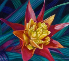 Exotic by Paula Parks
