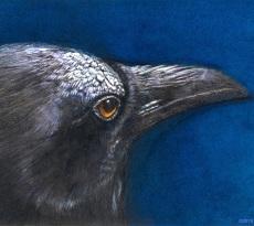 Night Crow by Rhonda Gardner