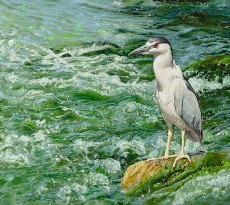Extreme Fishing by Sueellen Ross