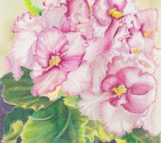 African Violet #1 by Trudy Rolla