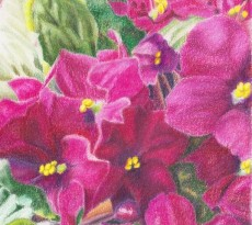African Violet #4 by Trudy Rolla