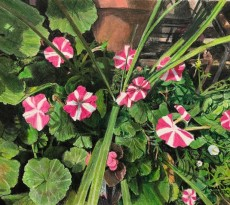 Petunia Explosion by Bill Walcott