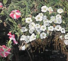 Petunia Party by Bill Walcott