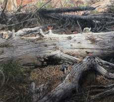 Three Towhees on a Log by Bill Walcott
