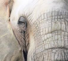 Here is Looking at You by Diane Masek-Blow