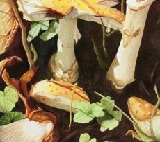 Mr Toad's Broken Chair by Diane Masek-Blow
