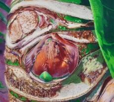 Heart of the Palm by Elizabeth Kincaid