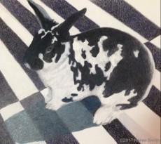 Betty Bunny by Karen L. Smith
