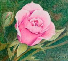 Pink by Karen L. Smith