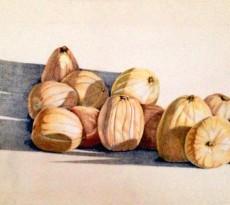 Pumpkins by Karen L. Smith