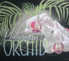 Orchid by Kristen Doty
