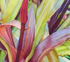 Hawaiian Bud by Linda Murray