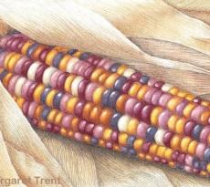 Indian Corn by Margaret Trent