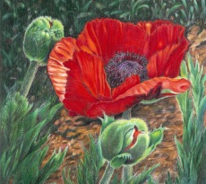 Poppy Path by Mary Ritchie