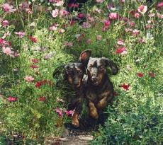 Dachshund Dash by Sueellen Ross