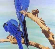 Bogey and Macaw by Teri Hamilton