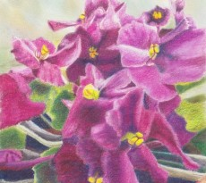 African Violet #3 by Trudy Rolla